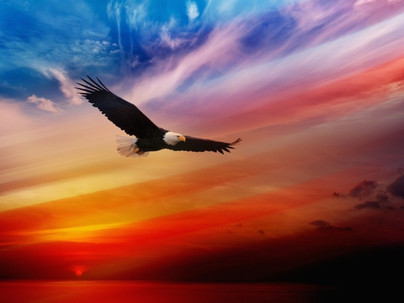 Eagle-Soaring-Wallpaper-800x600.jpg