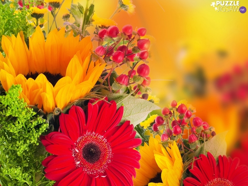 flowers-color-3.jpg